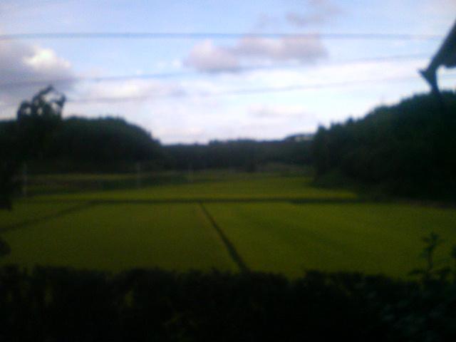 穏やかな一日です(^^)d